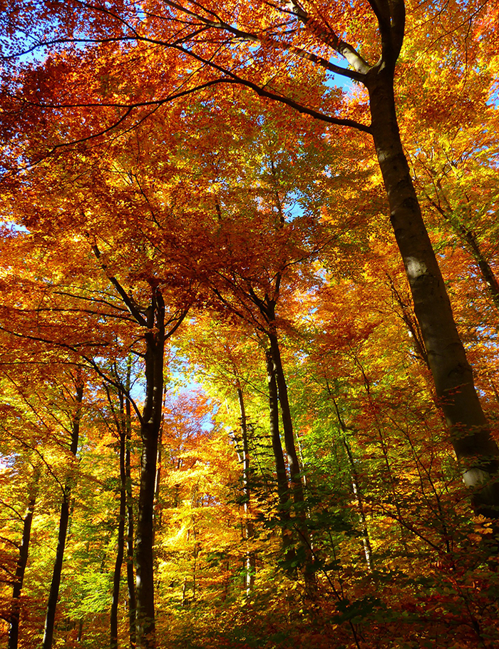 forest-63275_1920